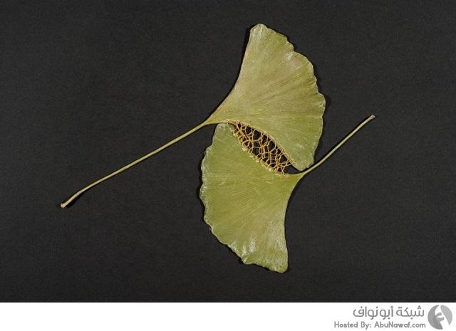 تطريزات مميزة على أوراق النبات المتساقطة 5