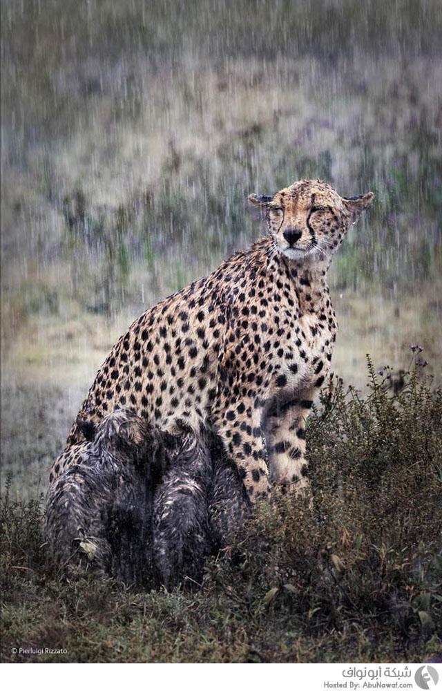 مسابقة تصوير للحياة البرية لعام 2014 9
