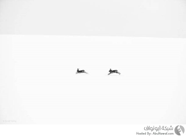 مسابقة تصوير للحياة البرية لعام 2014 17