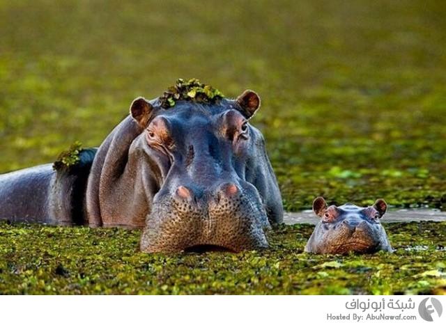 حيوانات برية برفقة صغارها 9