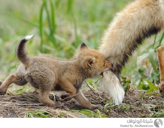حيوانات برية برفقة صغارها