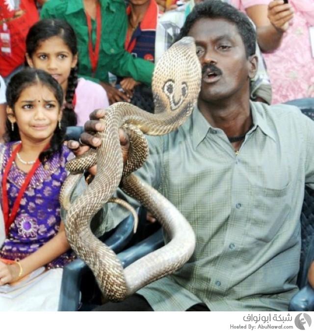 رجل هندي يرافق أفاعي سامة بكل مكان 1