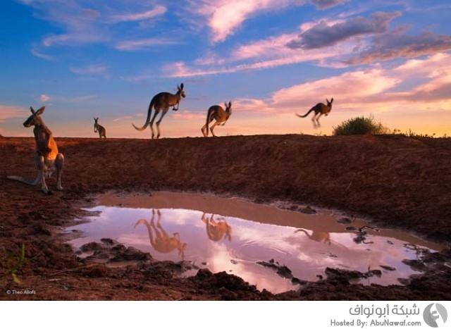 مسابقة تصوير للحياة البرية لعام 2014 4