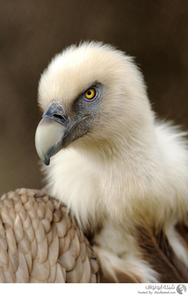 طائر داخل حديقة حيوانات