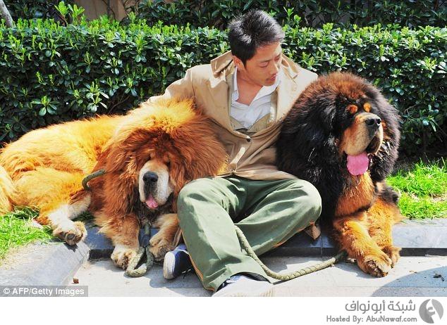 أغلى كلب في العالم