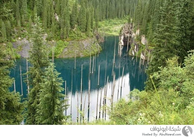 غابات كازاخستان الغارقة