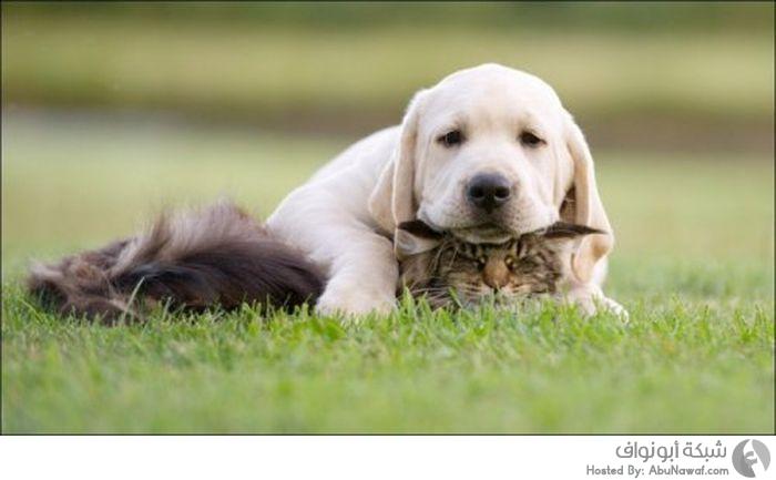 حيوانات جميلة