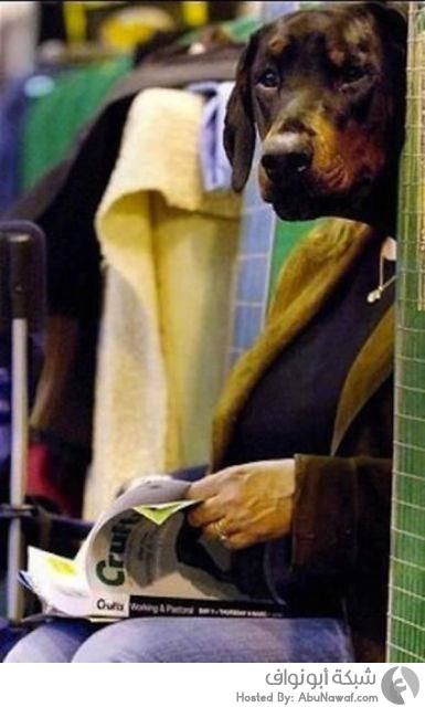 امراة برأس كلب