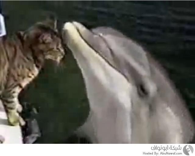 علاقة بين دلفين وقط