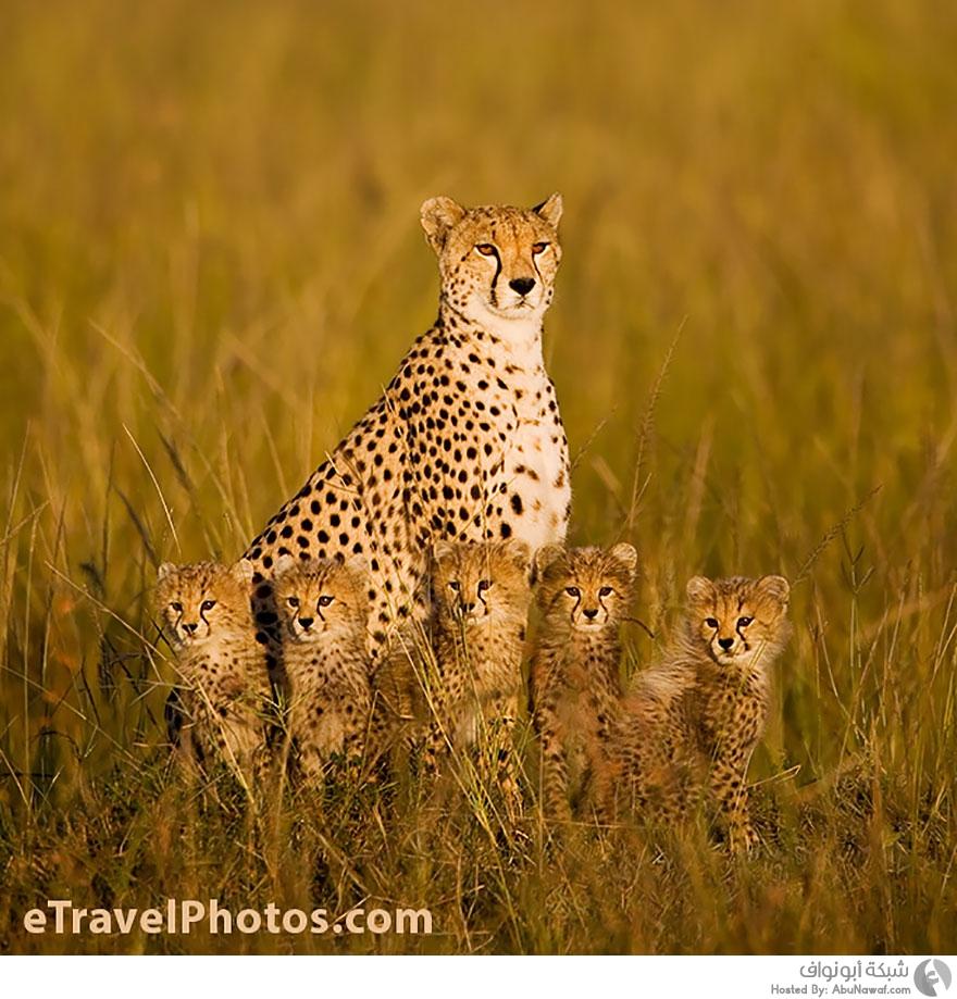 صور حيوانات برية 7