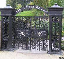 حديقة غريبة في انجلترا