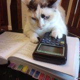 قطة تذاكر