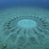 دوائر غريبة في قاع البحر