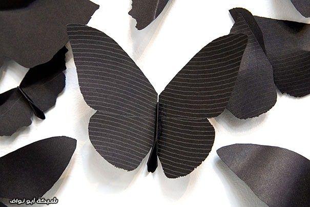 فراشة سوداء