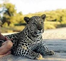 صديقة الحيوانات