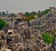 غابات الأحجار