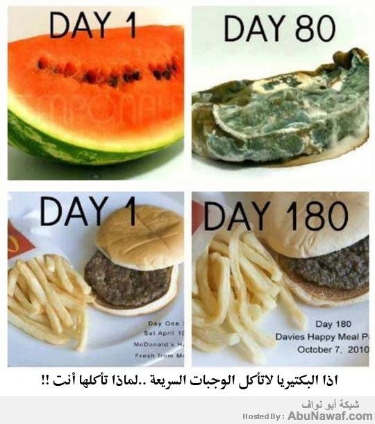 تأثير البكتيريا