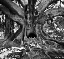 شجرة بالفوتوشوب