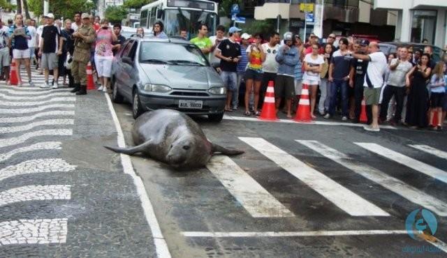 أسد البحر في الشارع