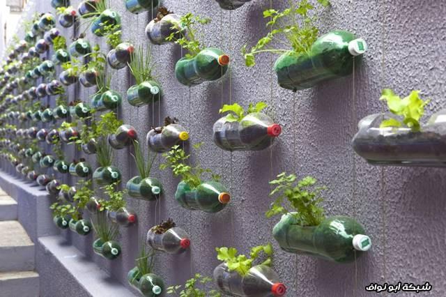 حديقة العلب البلاستيكية