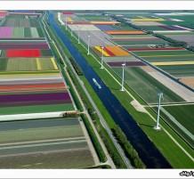 حقول هولندية