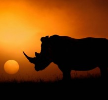 ظل وحيد القرن