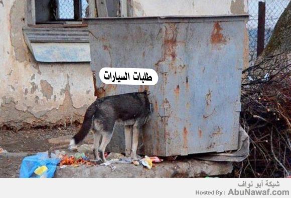 كلب يعبث بالقمامة