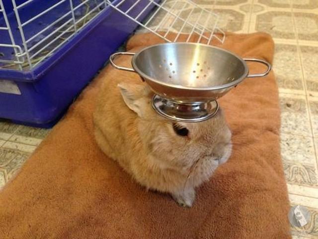 أرنب يرفع أثقال