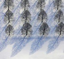 أشجار الشتاء