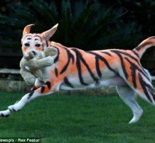 الكلب النمر