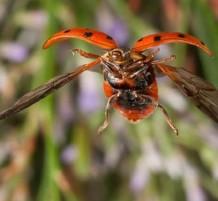 حشرة وهي تطير