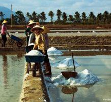 إستخراج الملح في فيتنام