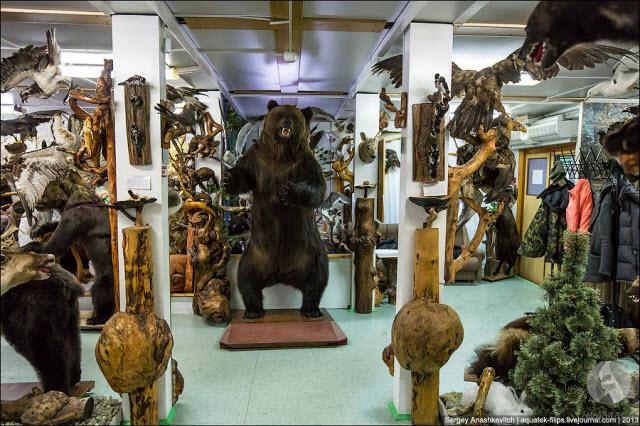 حيوانات محنطة في متحف