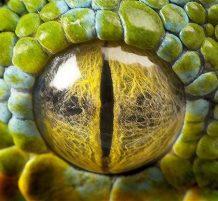 عين ثعبان شجرة خضراء