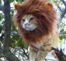 قبعة تجعل القط كالأسد
