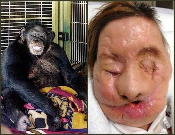 أشرس إعتداءات الحيوانات