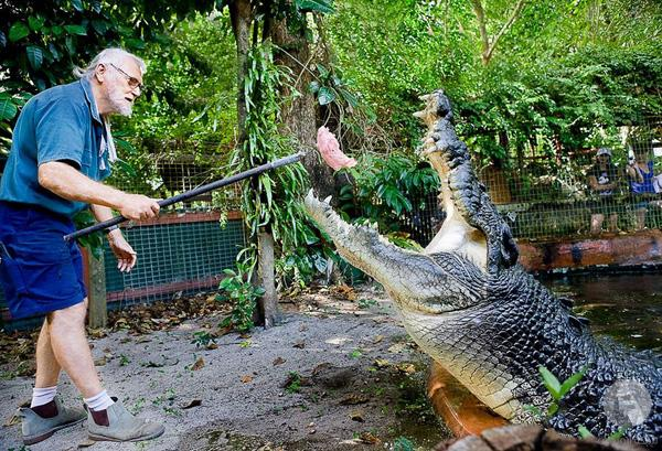 أكبر تمساح في العالم
