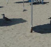 طيور تقف في الظل