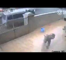 حرامية يسرقون كلب حراسة