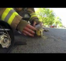 رجل إطفائي ينقذ قطة من حريق
