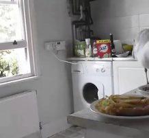 طائر نورس يسرق الطعام من المطبخ