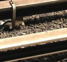 قطط هاربة تغلق مترو الأنفاق