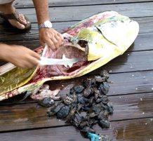 ماذا وجدوا بداخل السمكة