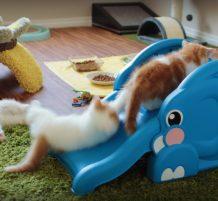 قطط صغيرة تلعب و تتزحلق