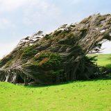 تأثير الرياح على الأشجار
