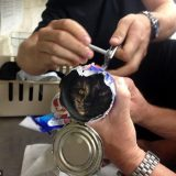 قطة علقت رأسها في علبة لحوم