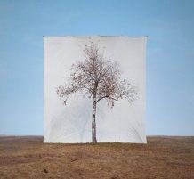 لوحات فنية من الشجر