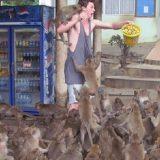 ورطة مع القرود