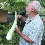 ثمرة كوسا طولها 1.8 متر