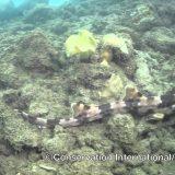 قرش يتمشى في قاع البحر